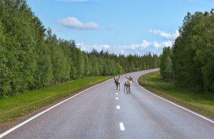 Assurance auto : collision avec un animal sauvage, l'indemnisation des dommages