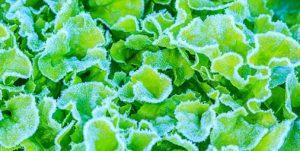 Exploitations agricoles : l'assurance contre l'inondation, la grêle, le gel ou la tempête